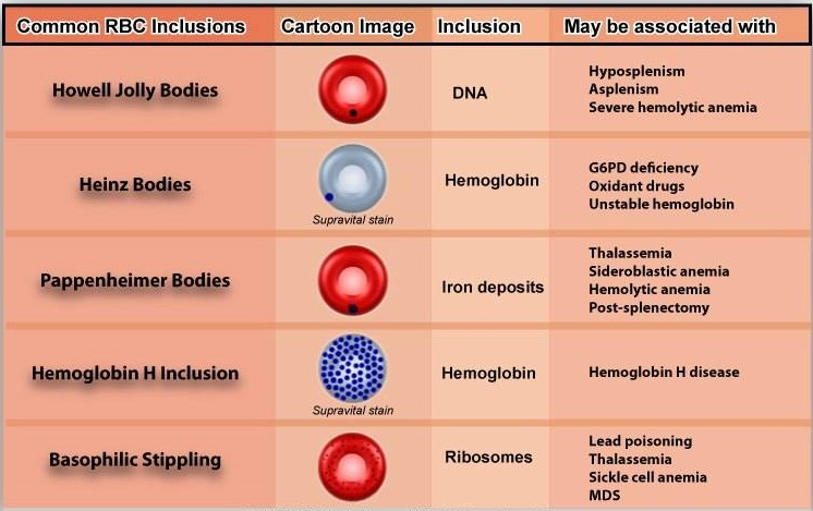 Red-blood-cell-inclusions
