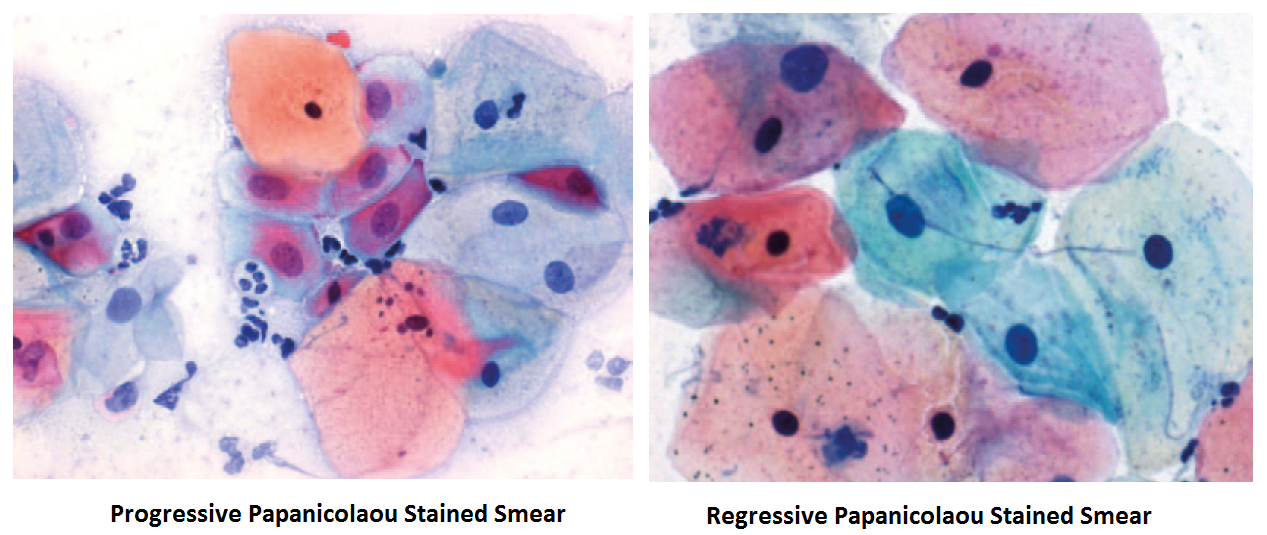 pap-stain