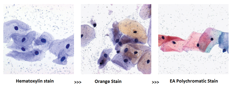 Papanicolaou (PAP) Staining : Introduction, Principle, Procedure and