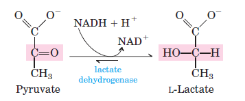 anaerobic-glycolysis