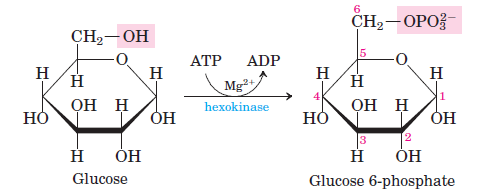 glycolysis-step-1