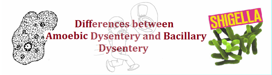 differences-between-amoebic-dysentery-and-bacillary-dysentery