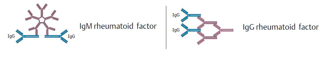 rheumatoid-factor-rf