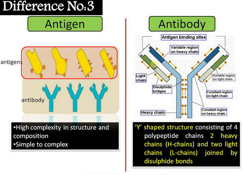 A closer look at the difference between antigen and antibody image photo picture