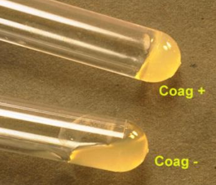 Tube Coagulase Test