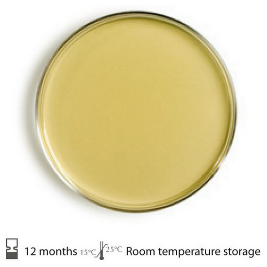 image of a tryptic soy agar plate