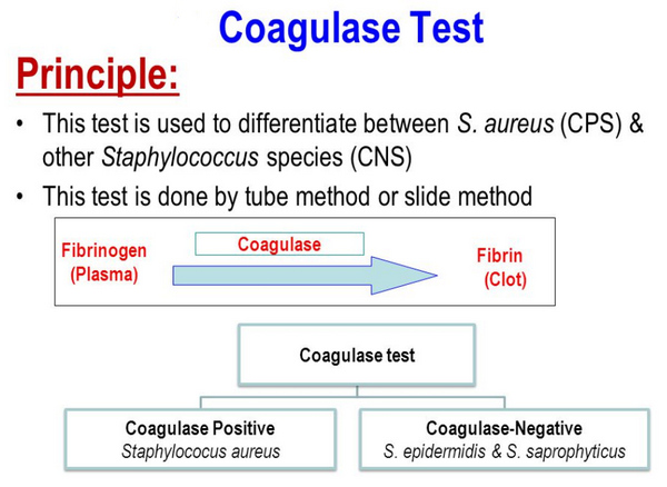 principles of coagulase test