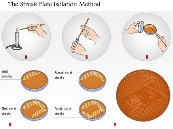 streak plate isolation method