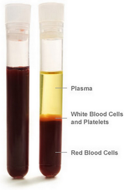 test tube labeling the plasma component of the blood