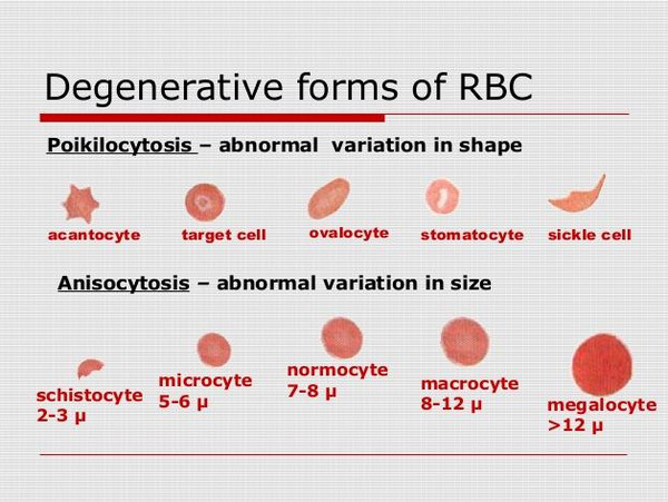 Red blood cells and the degenerative form