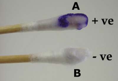 Swab method oxidase test