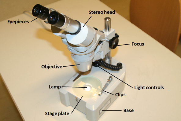 The different parts of a stereo microscope - labelling
