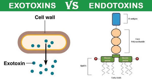 The mechanism of actions of endotoxins and exotoxins