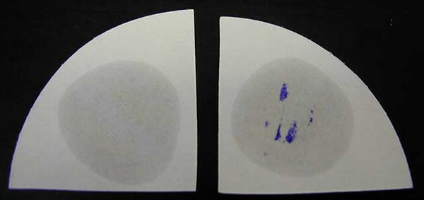 Wet filter method oxidase test