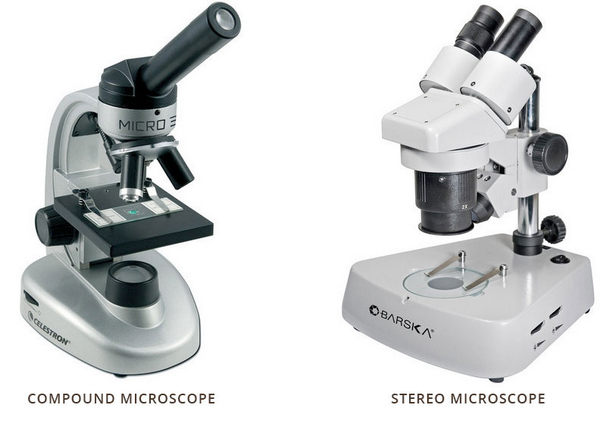 comparison image between stereo and compound microscope