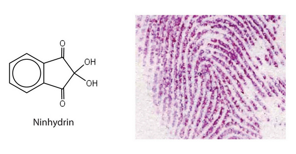 ninhydrin test is used to detect fingerprints