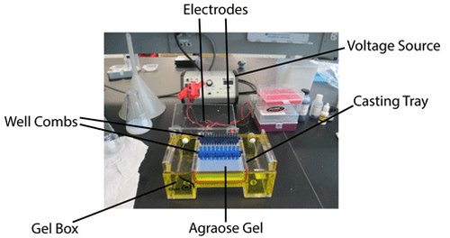 figure above shows the process of running an agarose gel