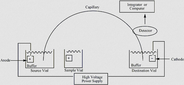 image above shows how capillary electrophoresis takes place