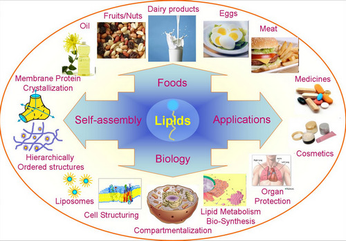 image that represents the structure and functions of lipids
