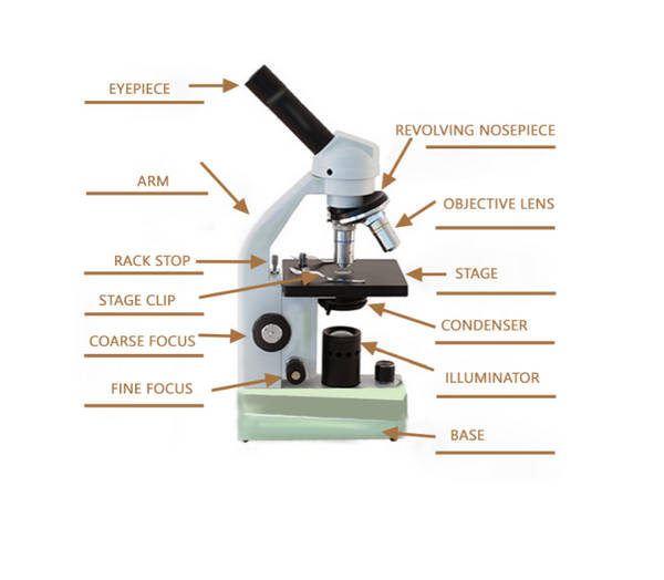Parts Of The Microscope With Labeling Also Free Printouts