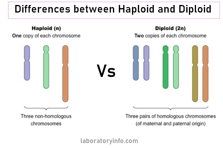 difference between haploid and diploid